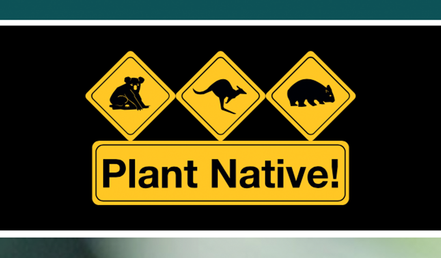 Plant Native! Website design and development by Eureka Creative